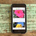 Ein Shazam für Pflanzen: PlantNet