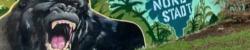Gorilla-Graffiti absch(affen) – Wer brüllt am lautesten?
